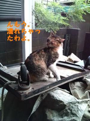 Miyako2_2