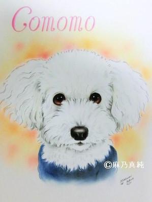 Comomo_3